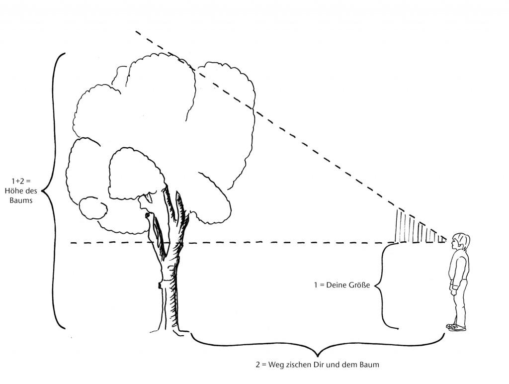 156-Baum