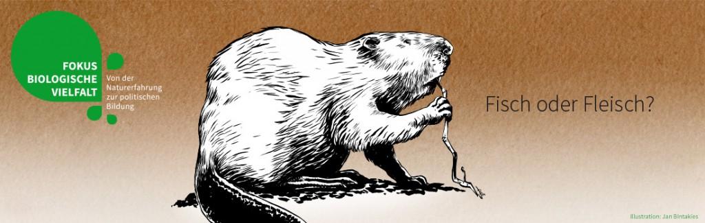 Biber (Illustration: Jan Bintakies)