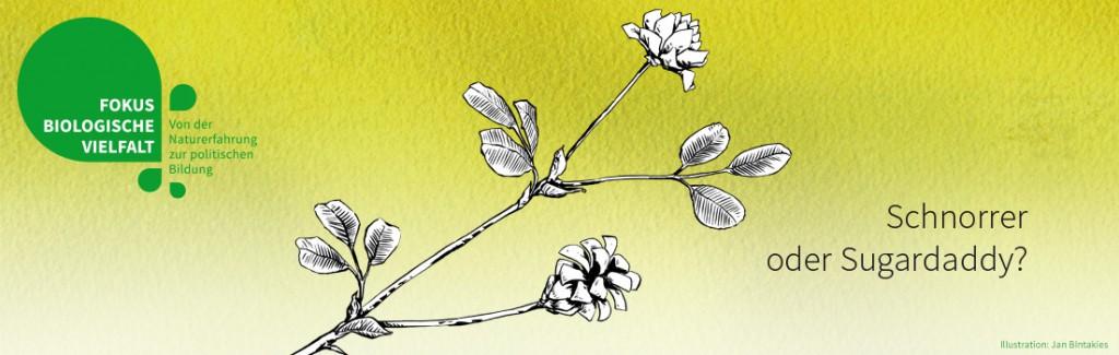 Feldklee (Illustration: Jan Bintakies)