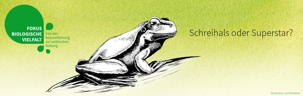 Laubfrosch (Illustration: Jan Bintakies)